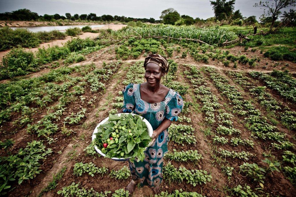 ANSA / امرأة مهاجرة تعمل في أحد الحقول. المصدر: أنسا / أوكسفام