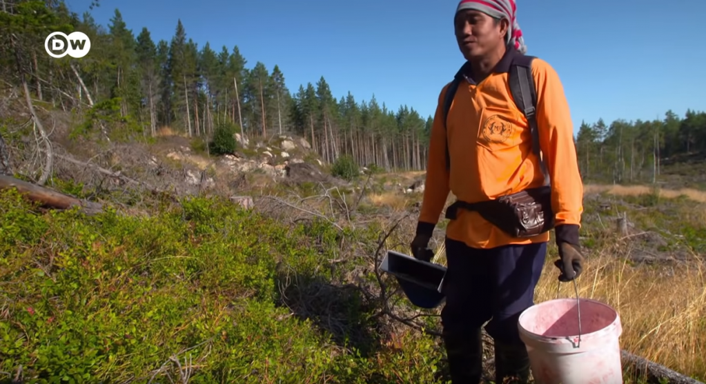 Chang was one of about 6,200 Thai berry-pickers in Sweden in 2019 | Source: Screenshot from DW /ARTE / WDR film about Thai berry pickers in Sweden