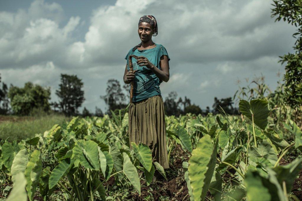 ANSA / امرأة مهاجرة تعمل في أحد الحقول في مجال الزراعة. أرشيف / وكالة الأنباء الإيطالية ANSA / OXFAM