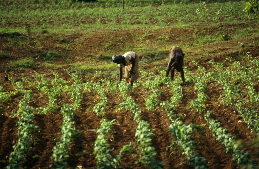 Getty Images/Travel Ink | L'agriculture du Burkina Faso dépend principalement des pluies.
