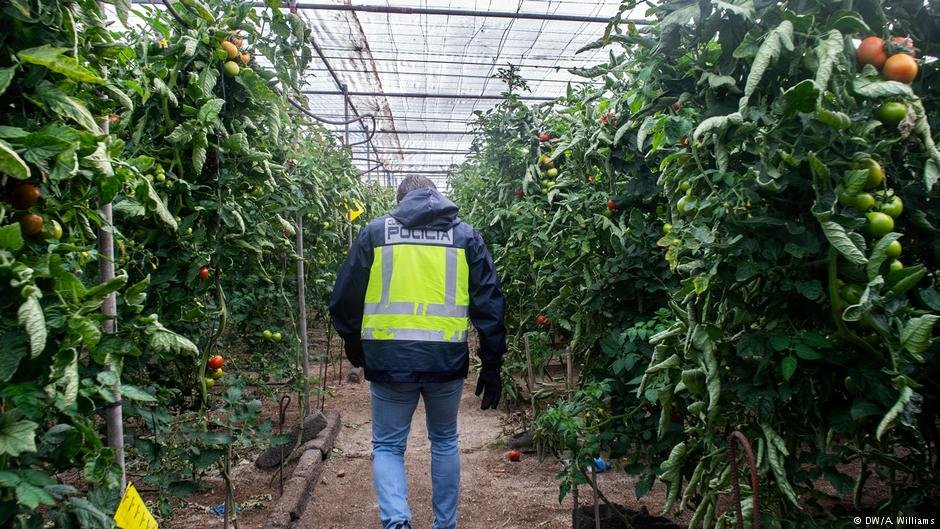 A police officer walks through a greenhouse | Photo:. DW/A.Williams