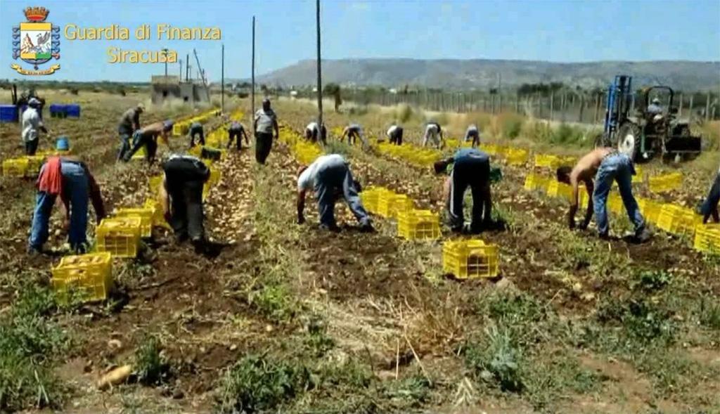 ansa / مهاجرون يعملون في حقول صقلية. المصدر: صورة أرشيف من المكتب الصحفي للشرطة المالية.