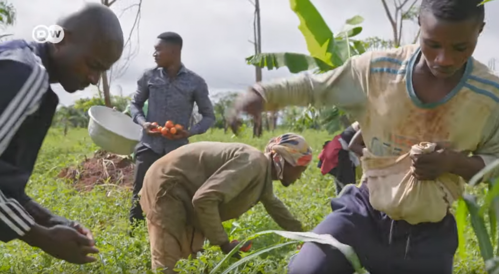 Farmers are finding it hard to sell their tomato crops in Ghana leading to unemployment and a wish to migrate | Photo: Screenshot DW documentary Tomatoes and Greed