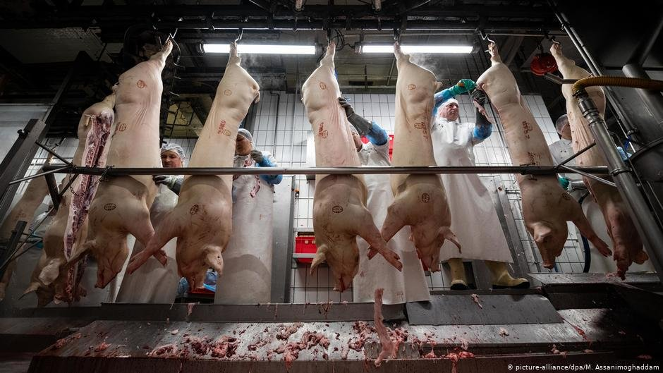 German slaughterhouses face scrutiny after COVID-19 outbreaks | Photo: Picture-alliance/dpa/M.Assanimoghaddam