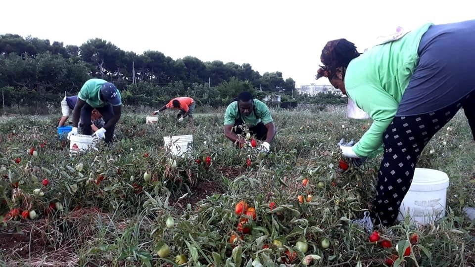 Migrants harvest tomatoes in Puglia | Photo: Sfruttazero