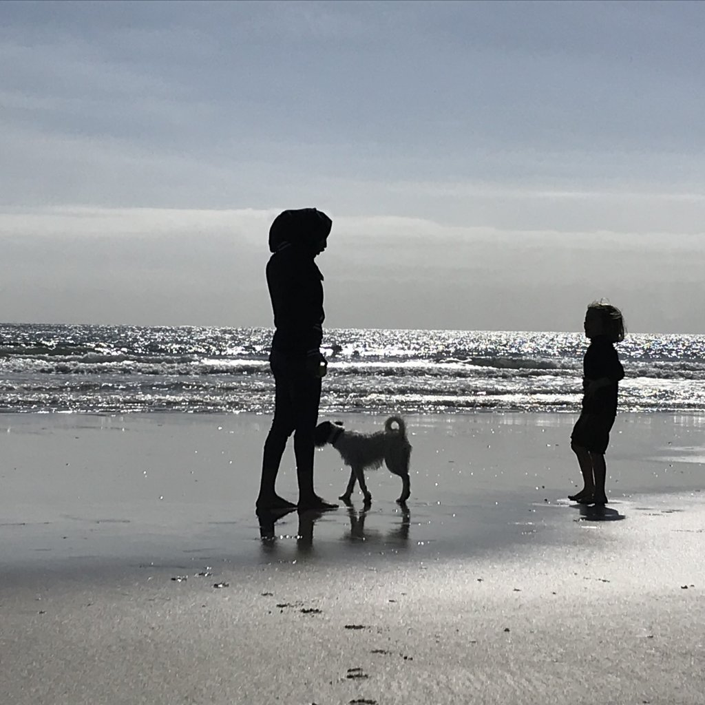 Ife sur une plage de Cornouailles, dans le sud-ouest de l'Angleterre. Crédit : DR