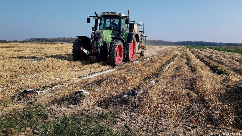 Des centaines de travailleurs saisonniers manquent l'appel pour cette saison des récoltes en Allemagne mais aussi ailleurs en Europe. Crédit : DW