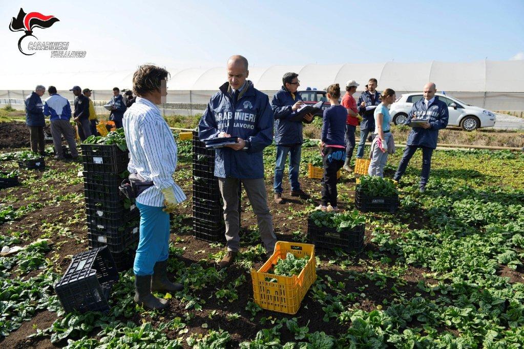واحد نظامی ایتالیا در حال ارزیابی کارگران در یکی از مزارع این کشور میباشد. Photo: ARCHIVE/CREDIT/CARABINIERI PRESS OFFICE