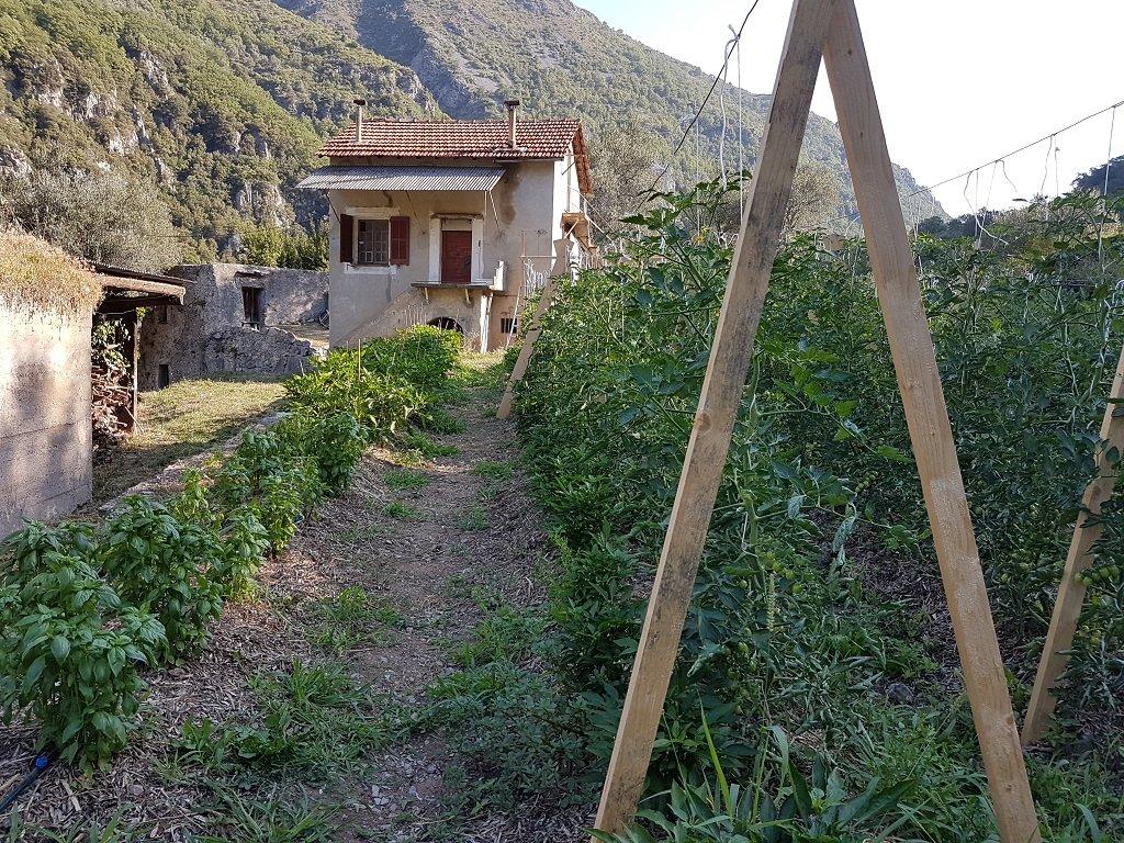 جانب من المزروعات التي ينتجها مشروع سيدريك هيرو في روايا. مهاجر نيوز
