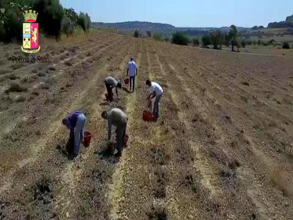 A still image from a video shows migrant farm workers in a agricultural field in Puglia.  PHOTO/ARCHIVE/ANSA/STATE POLICE