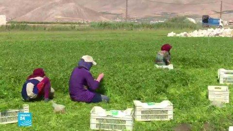 آلاف الأطفال السوريين يعانون ظروف عمل قاسية في قطاع الزراعة بلبنان