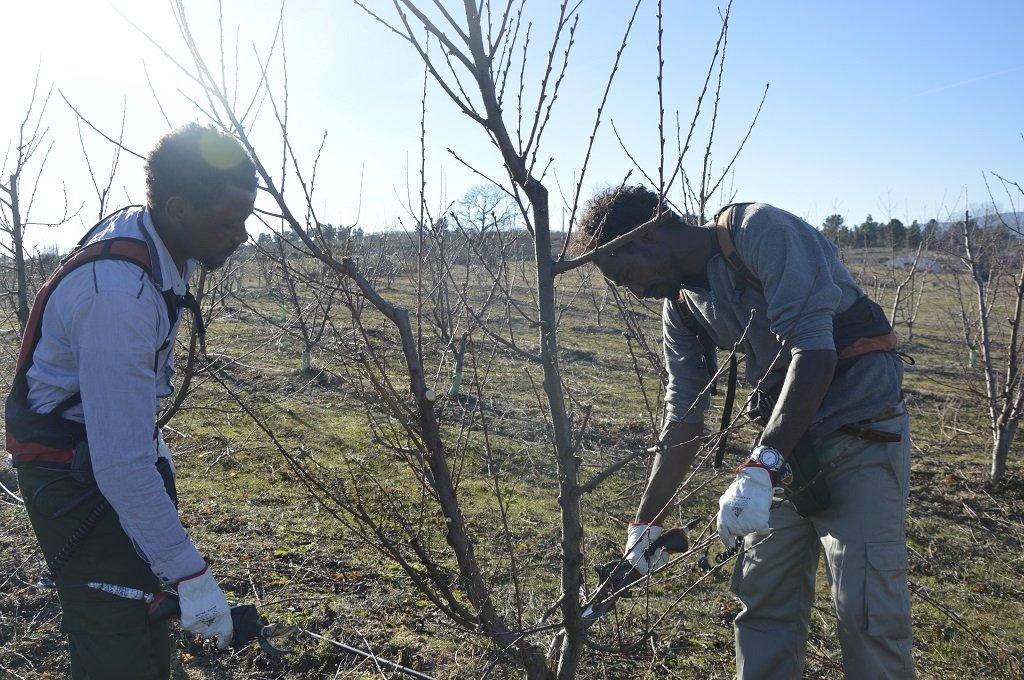 Gebru Mehari et d'Hadush Tsegay, originaires d'Érythrée, travaillent depuis décembre à quelques kilomètres de Fundão dans le secteur agricole. Crédit : Maëva Poulet / InfoMigrants.