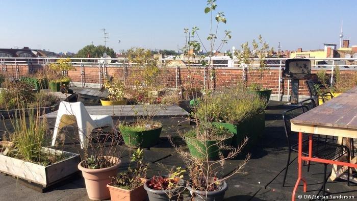 Le jardin sur le toit-terrasse est l'un des endroits les plus appréciés de la maison