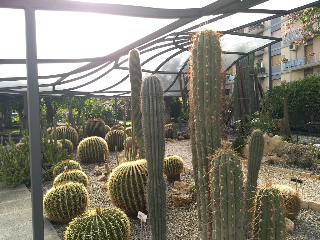 Catania botanic garden cactus  Photo Emma Wallis