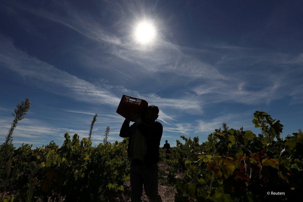 صورة من الأرشيف، عامل موسمي في مزرعة إسبانية. المصدر: رويترز/ سيرج بيريز
