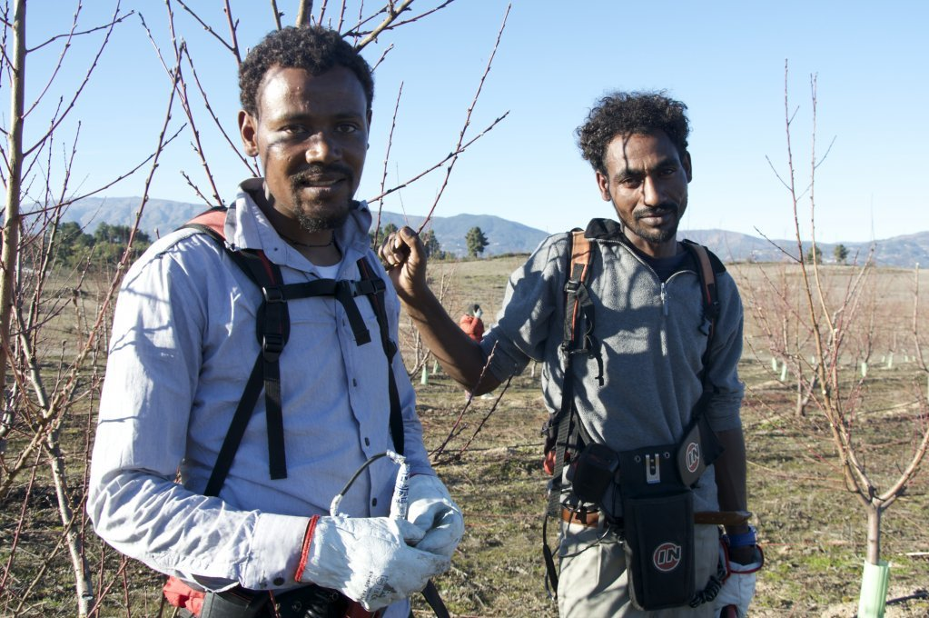 Gebru Mehari and d'Hadush Tsegay from Eritrea were accepted by the Portuguese town of Fundão in September, 2018. Since their arrival, they have both found work in the agriculture sector.   Photo: Maëva Poulet / InfoMigrants.