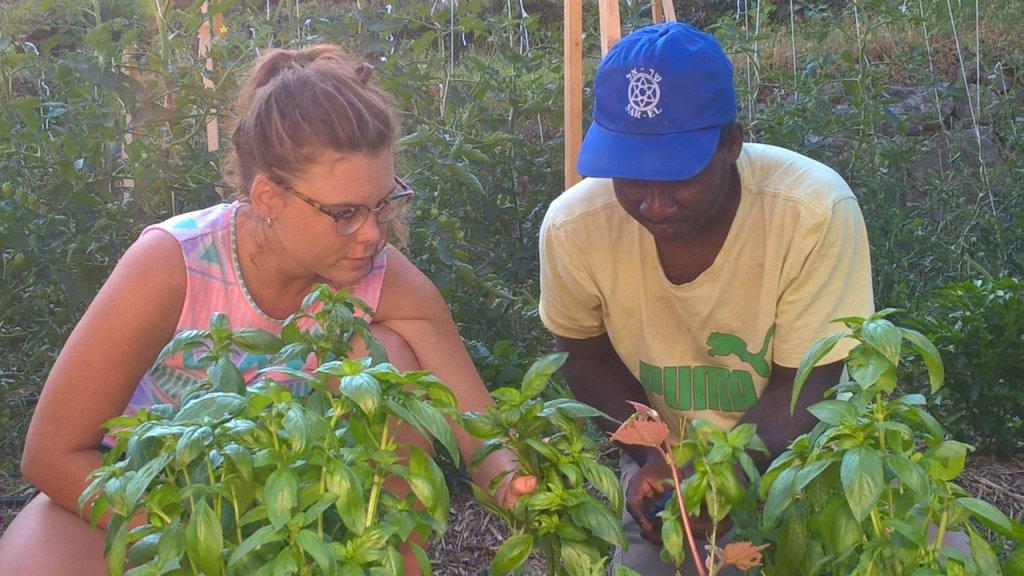 Djasson, demandeur d'asile originaire de Casamance, au Sénégal et membre d'Emmaüs Roya, coupe du basilic en compagnie de Charlotte, une bénévole. Crédit : Charlotte Oberti