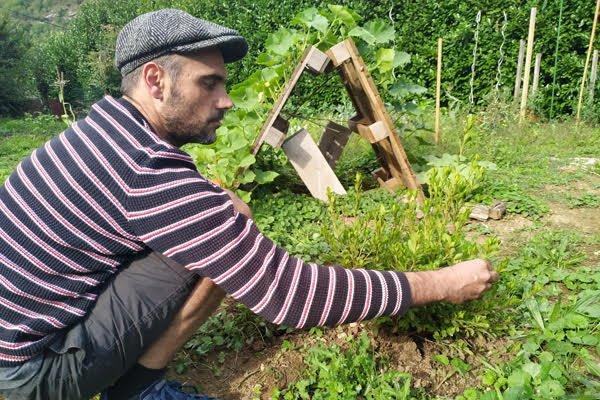 Lazale plant par Frdric dans son potager en hommage  Zache AW