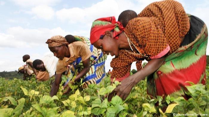 Farmers in Burundi