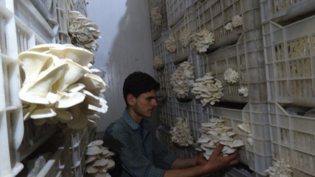يعمل في مزرعة أحمد في عفرين ٤ أشخاص، ويأمل أن يتطور المشروع ويصبح أكبر كما كان عليه في مدينته الأم في الغوطة.