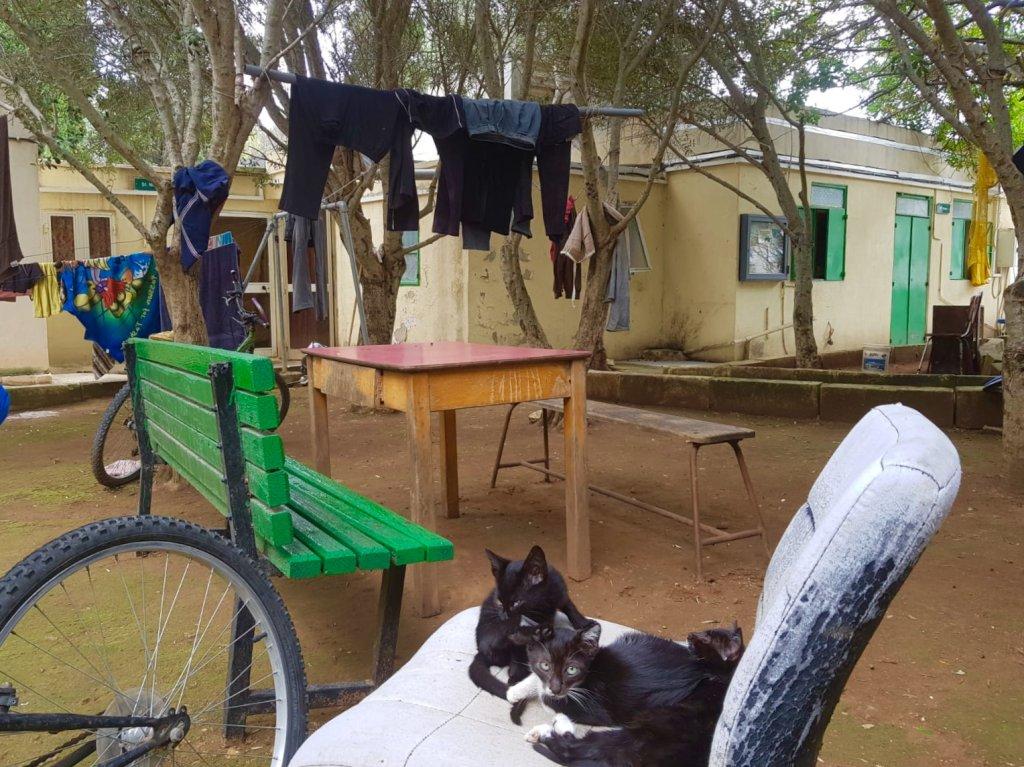 Des conteneurs et des tentes ont t installs dans les jardins du Peace Lab pour les migrants dbouts Crdit  Anne-Diandra Louarn  InfoMigrants