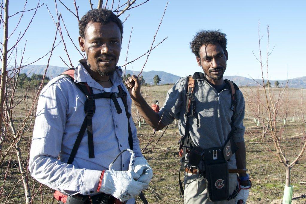 جبرو مهاري وهادوش تسيجاي، الآتيين من إريتريا، تم استقبالهما في مدينة فونداو بالبرتغال، ويعملان حاليا في مجال الزراعة. | المصدر: مايفا بوليه/ من مهاجر نيوز
