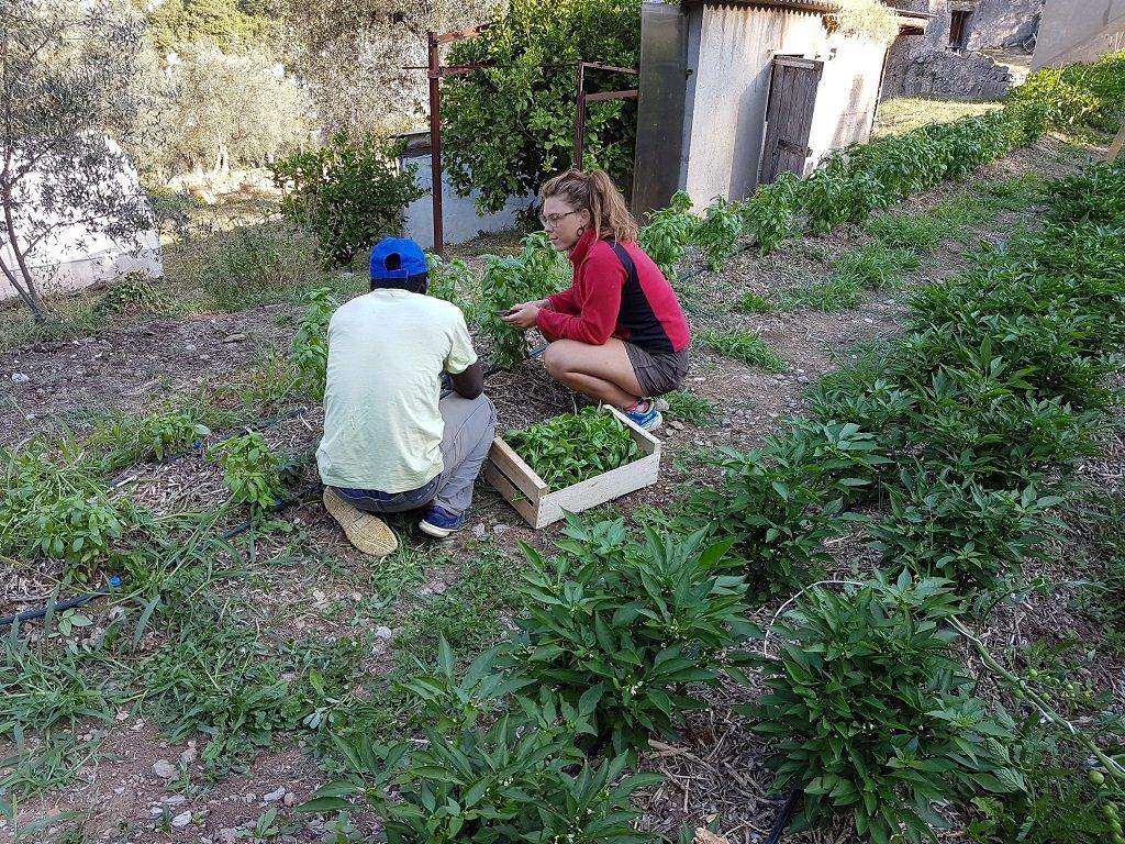 شارلوت، إحدى العاملات المتطوعات في المشروع، برفقة أحد المهاجرين القادمين من السنغال. في الصورة يقومان بالاعتناء بشتل الحبق. مهاجر نيوز