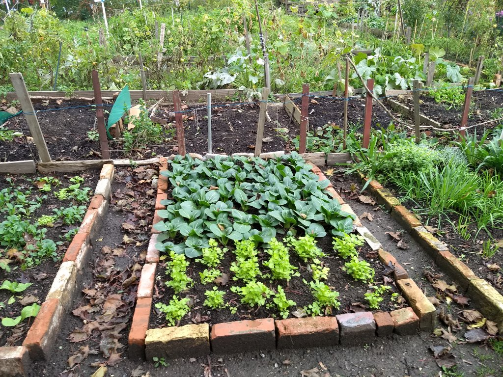 Most people have about 20 cubic meters of space in which to garden  Photo Emma Wallis