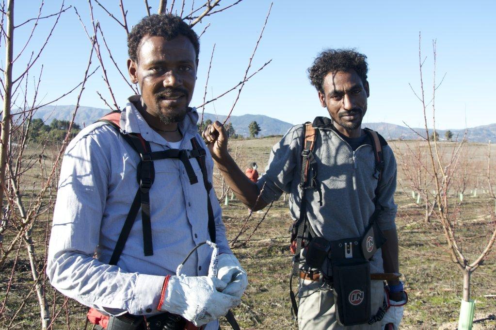 Gebru Mehari et d'Hadush Tsegay, originaires d'Érythrée, ont été accueillis en septembre 2018 à Fundão, au Portugal. Ils ont désormais trouvé un travail dans l'agriculture. Crédit : Maëva Poulet / InfoMigrants.