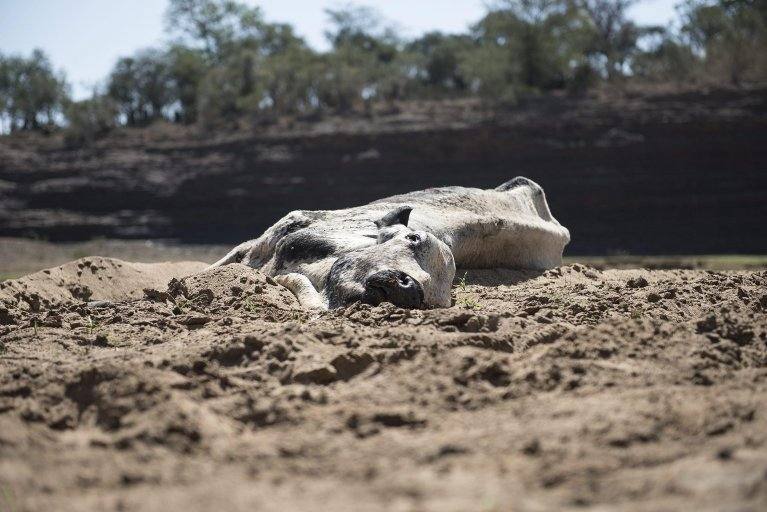 A dead cow lies in a dried-up river in Africa | Credit: EPA