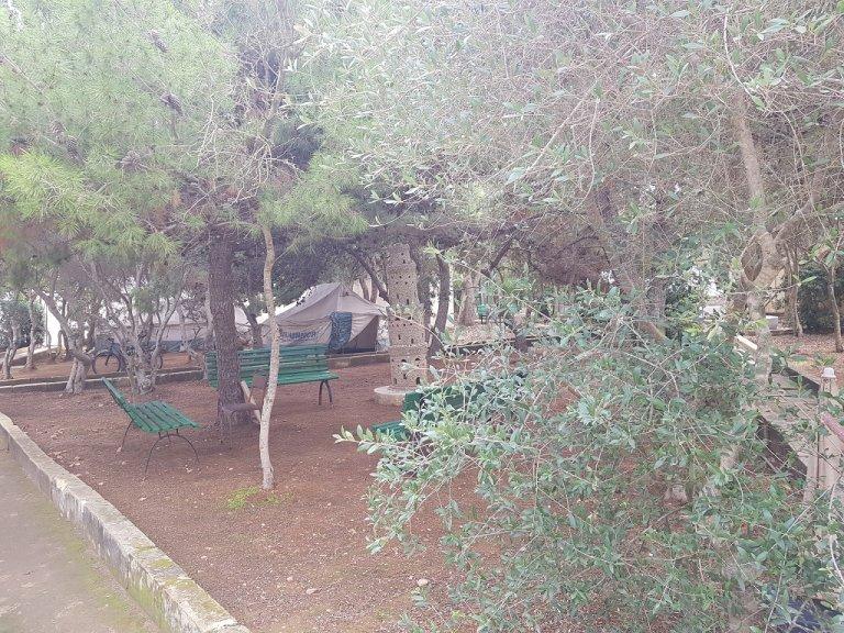 توزعت الخيم بين أشجار الحديقة، وتؤوي كل منها ستة أشخاص. مهاجر نيوز