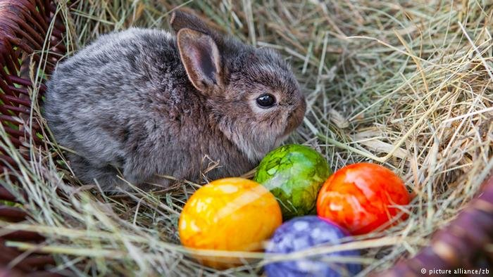 The Easter bunny and painted egg are a common sight around Easter. In supermarkets, you will see chocolate bunnies and eggs everywhere