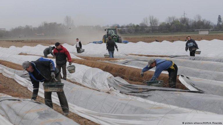 Seasonal workers in Bad Krozingen, Germany