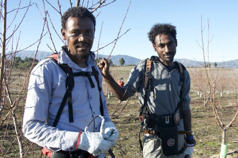 Gebru Mehari and d'Hadush Tsegay from Eritrea were accepted by the Portuguese town of Fundão in September, 2018. Since their arrival, they have both found work in the agriculture sector. | Photo: Maëva Poulet / InfoMigrants.