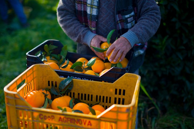 Aldo Pavan/Getty Images |Le secteur agricole italien est un important vivier de recrutement de main-d'oeuvre immigrée, souvent non déclarée.