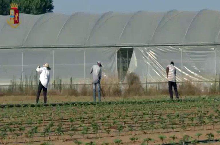 ANSA / مهاجرون يعملون بشكل غير شرعي في إحدى المزارع في تيراسينا، حيث قامت الشرطة هناك مؤخرا بتوقيف شخصين. المصدر: أنسا/ شرطة يوفيتشيو سامبا.