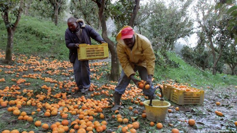 From archive: Migrants picking oranges in Italy | Photo: Picture-alliance/dpa