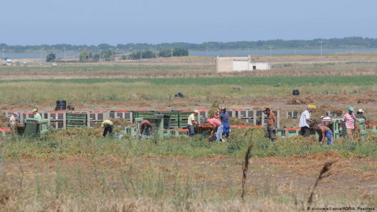 From file: Migrant workers working at tomato harvest in the farmlands of Foggia, Puglia region in Italy, August 2013 | Picture-alliance/ROPI/A.Pisacreta