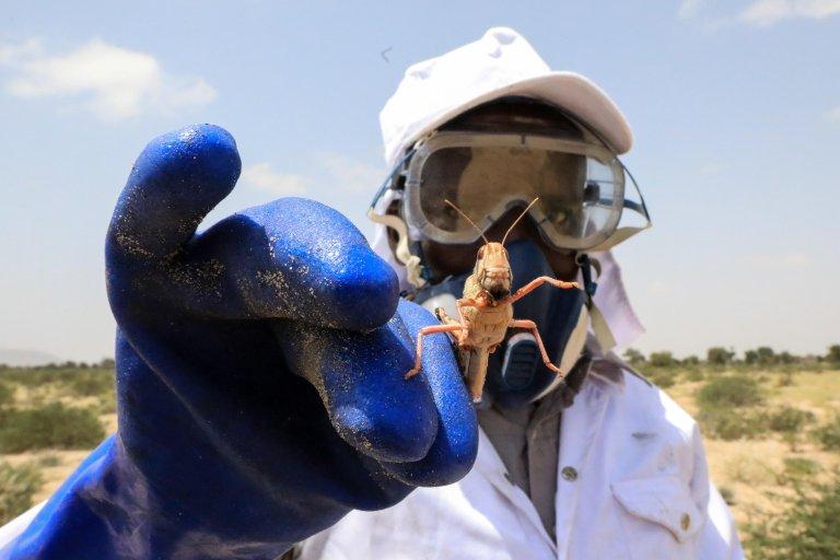 ANSA / عامل من وزارة الزراعة في أرض الصومال يمسك بجرادة صحراوية بعد رشها بمادة مبيدة. المصدر: إي بي إيه / دانيال أورينجو.