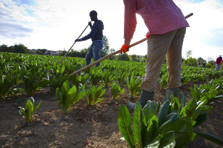 © Aldo Pavan/Gettyimages |Au sud de l'Italie, dans les champs de fruits et légumes, impossible de se passer de main-d'oeuvre étrangère (photo d'illustration).