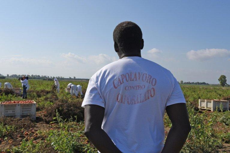 Des migrants dans un champ de tomates, dans le sud de l'Italie. Crédit : Ansa