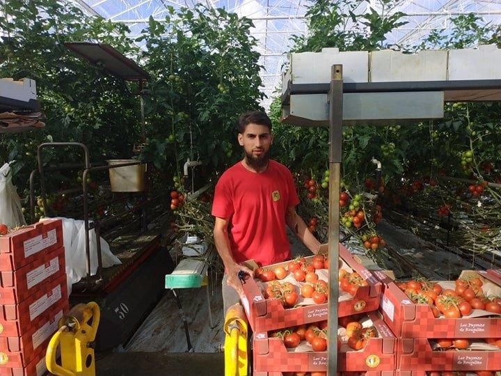 بلال، پناهنده افغان به عنوان کارگر فصلی در گلخانه توم داکی در شهر پرانتیس آن بورن در جنوب فرانسه کار میکند. عکس از مهاجر نیوز
