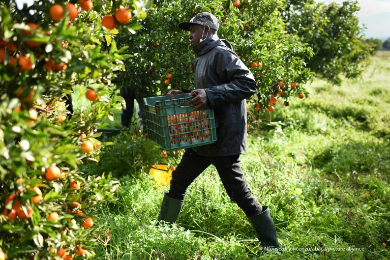 African immigrants harvest clementines on December 12, 2020 in Corigliano-Rossano, Calabria, Italy. Agriculture is one of the sectors that remained operational despite the COVID-19 pandemic | Photo: Picture alliance / abaca | Di Vincenzo Alfonso/IPA/ABACAPRESS.COM