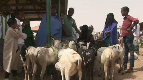 Au Somaliland, la situation devient catastrophique, face au manque d'eau et de nourriture.